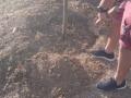 quercia-francesco-morlupo-3