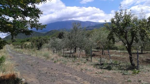 etna-campo-estivo